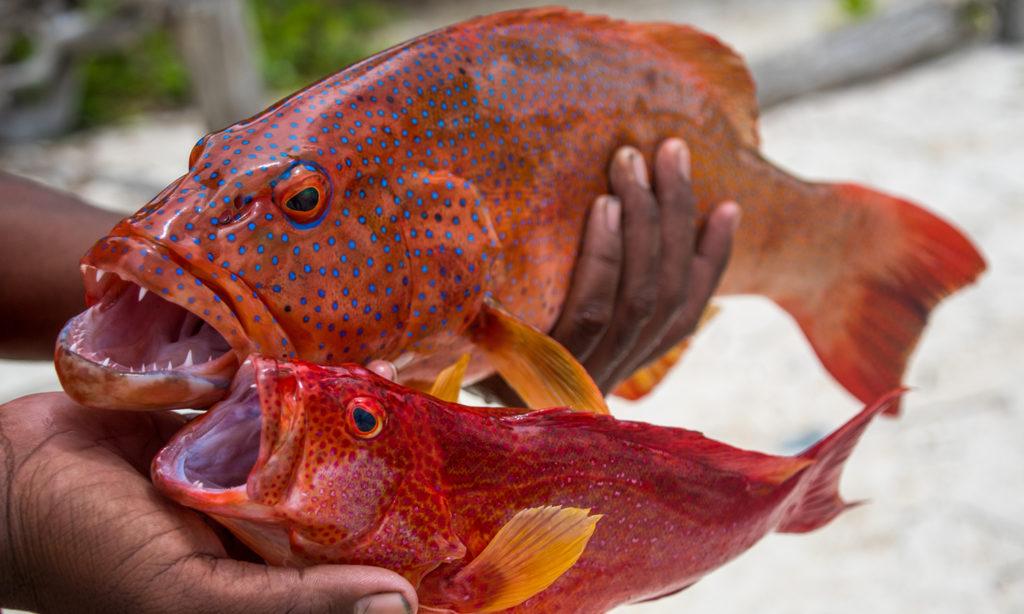 piatto base ovviamente pesce