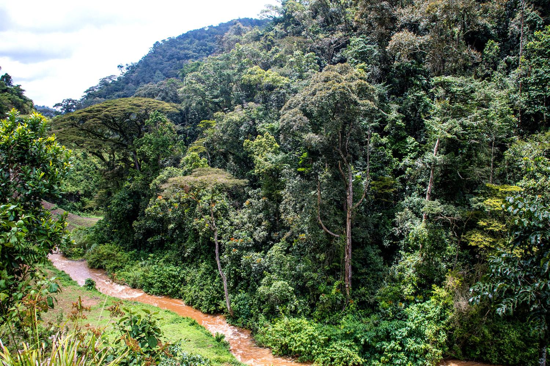 la foresta pluviale tropicale di Bwindi  che si ritiene abbia più di 25.000 anni e che è sito patrimonio mondiale dell'UNESCO dal 1994 per la sua grande biodiversità.
